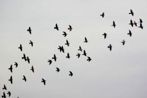 bird-1964093_1920