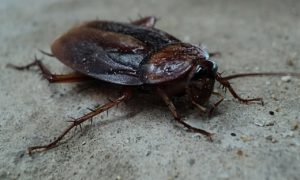 cockroach-70295_1280